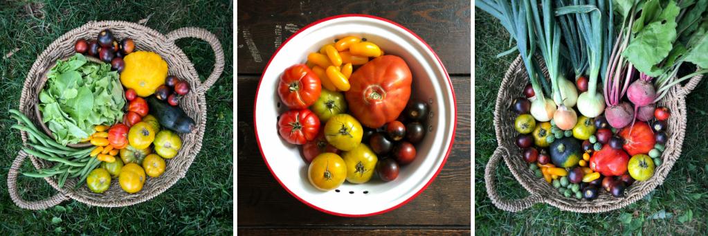 Vegetable harvests